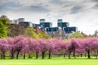 Blossom in the Meadows IMG20180507P0007JG